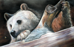 bear-piccy