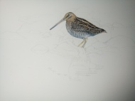 startedby painting of snipe